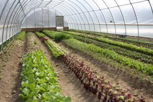 Cultivos bajo cubierta