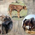 Curso Posgrado: Patología Gral. y Especial en Animales Domésticos